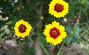 Картинка цветы, трио, Meduzanol ©, жёлто-коричневые