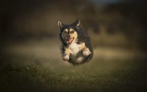 Картинка глаза, фон, собака, бежит