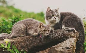 Обои бревно, парочка, кошки, две кошки