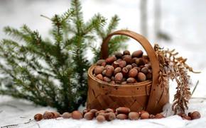 Картинка зима, лес, природа, ель, мороз, прогулка, орехи, лукошко, композиция, январь, репортаж