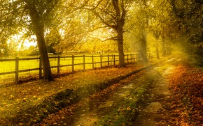 Картинка солнце, забор, желтые, дорога, деревья, осень, листья