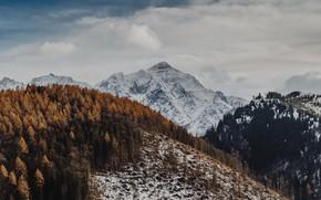 Картинка зима, лес, горы