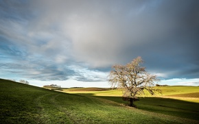 Картинка поле, небо, дерево, утро, Германия, Germany, Bavaria, Sirchenried
