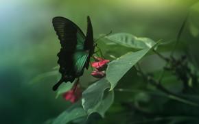Картинка бабочка, крылья, насекомое, зеленая