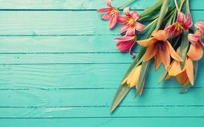 Картинка цветы, букет, тюльпаны, wood, flowers, tulips, spring