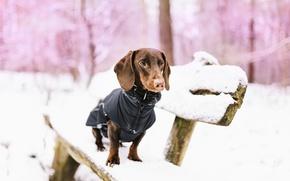 Обои снег, скамья, собака
