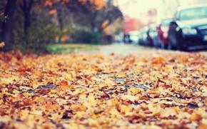 Картинка дорога, осень, машины, город, улица, размытость, боке