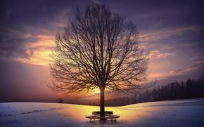 Обои закат, зима, скамья, дерево