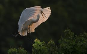 Картинка ветки, птица, крылья, цапля