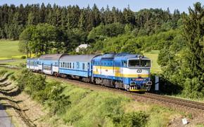 Обои лес, путь, поезд, вагоны, железная дорога, локомотив, forests, trains, railroads
