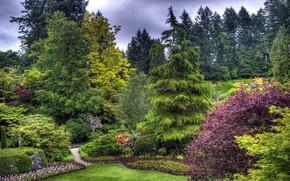 Картинка деревья, парк, красота