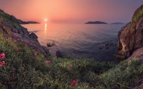 Обои море, лето, солнце, закат, лилии