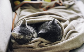 Картинка животные, кот, коты, шерсть, спят