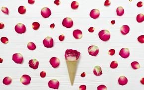 Картинка цветок, роза, лепестки, Рожок