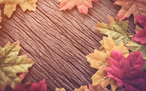 Картинка осенние, фон, leaves, autumn, листья, дерево, wood, background, осень, maple