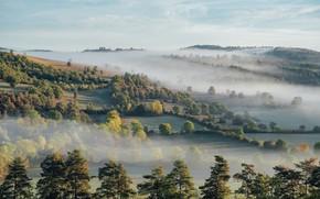 Картинка поле, деревья, туман