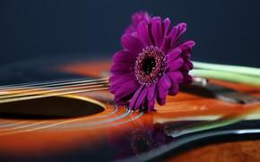 Картинка фон, гитара, цветок