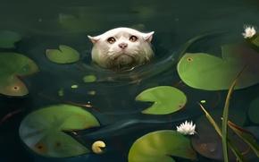 Обои кошка, листья, пруд, кувшинки, by SalamanDra-S