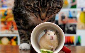 Картинка кошка, кот, ситуация, хомяк, засада, кружка, грызун