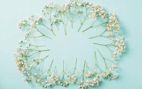 Картинка цветы, фон, white, белые, flowers, spring, frame, floral