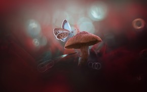 Картинка макро, бабочка, гриб, боке, грибочек
