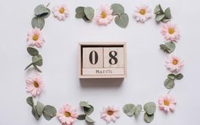 Картинка цветы, праздник, 8 марта, хризантемы, женский день