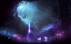Обои лес, свет, деревья, ночь, олень, арт, рога