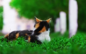 Картинка зелень, кошка, фон, травка