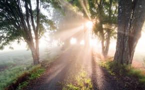 Картинка дорога, лето, свет, туман, утро