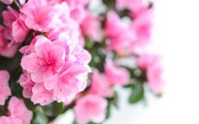 Картинка цветы, букет, розовые