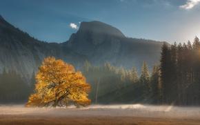 Картинка лес, свет, горы, дерево, США