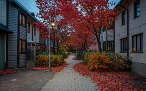 Обои осень, фонари, вечер, улица, огни, листья, кусты, деревья, Швеция, Стокгольм, дома, тротуар