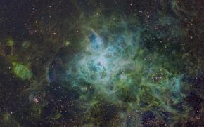 Обои звезды, туманность, nebula, tarantula