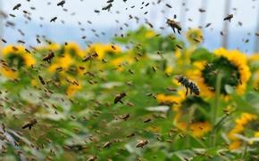 Картинка рой, пчёлы, в рою а не в раю