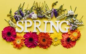 Картинка цветы, весна, colorful, хризантемы, flowers, spring, bright