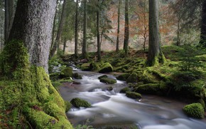 Картинка Поток, Деревья, Река, Лес