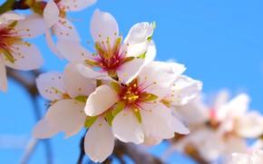 Картинка цветы, дерево, Весна, веточки