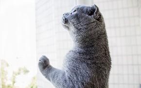 Картинка кот, стекло, окно