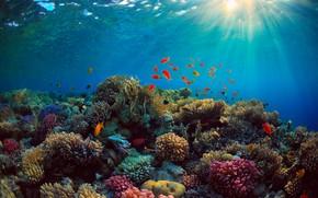Картинка море, рыбы, синева, дно, кораллы, лучи света, Подводный мир