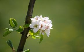 Картинка ветка, весна, цветение