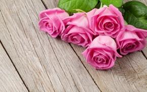 Картинка дерево, доски, розы, бутоны
