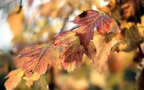 Картинка осень, листья, фон