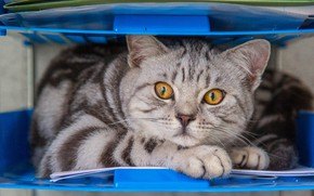 Картинка глаза, кот, взгляд, желтые