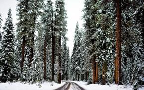 Обои зима, лес, снег, деревья, дорога