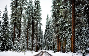 Картинка зима, дорога, лес, снег, деревья