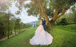 Картинка девушка, любовь, дерево, Природа, Пара, парень, свадьба, молодожены