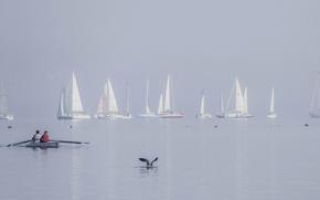 Картинка озеро, птица, лодка, яхта, парус