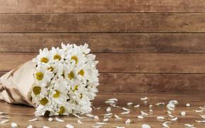 Картинка цветы, букет, лепестки, хризантемы