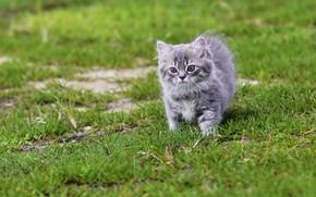Картинка трава, котенок, малыш
