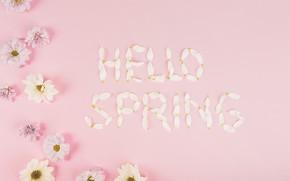 Картинка цветы, ромашки, весна, лепестки, розовые, fresh, хризантемы, pink, flowers, spring, petals, hello, tender